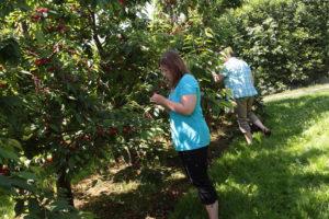 Obstbäume entdecken